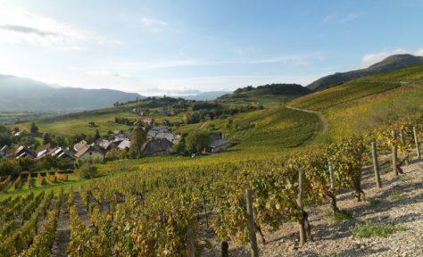 Paysage viticole à Chignin, massif des Bauges